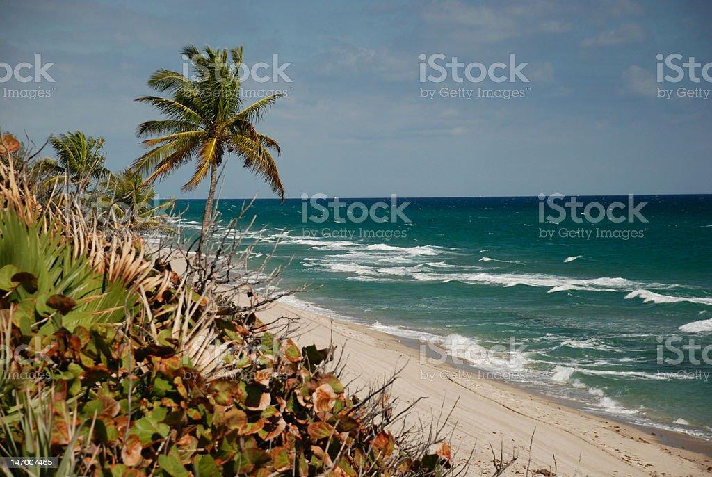 red reef beach stock photo
