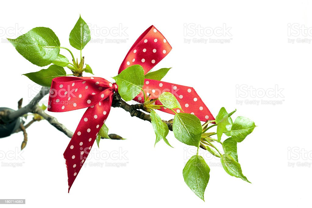 Red ribbon at spring branch. royalty-free stock photo