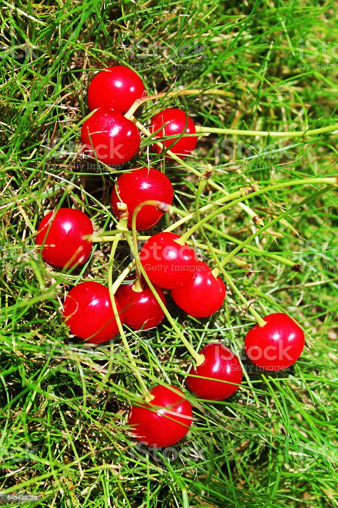 Red ripe cherry stock photo