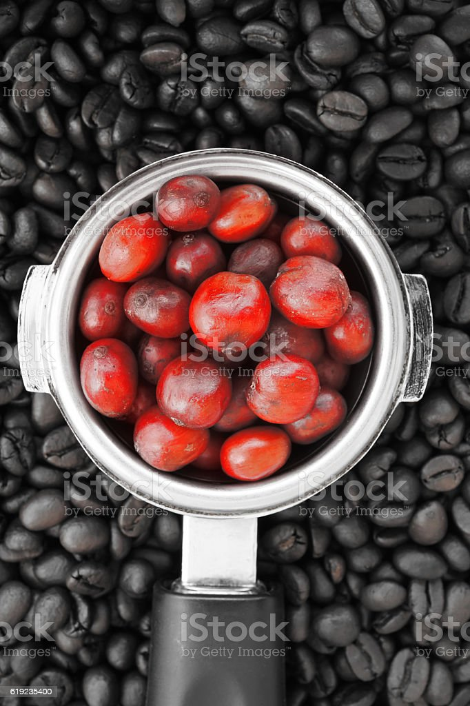 red ripe coffee on coffee beans backgournd stock photo