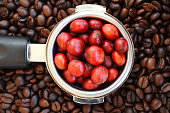 red ripe coffee on coffee beans