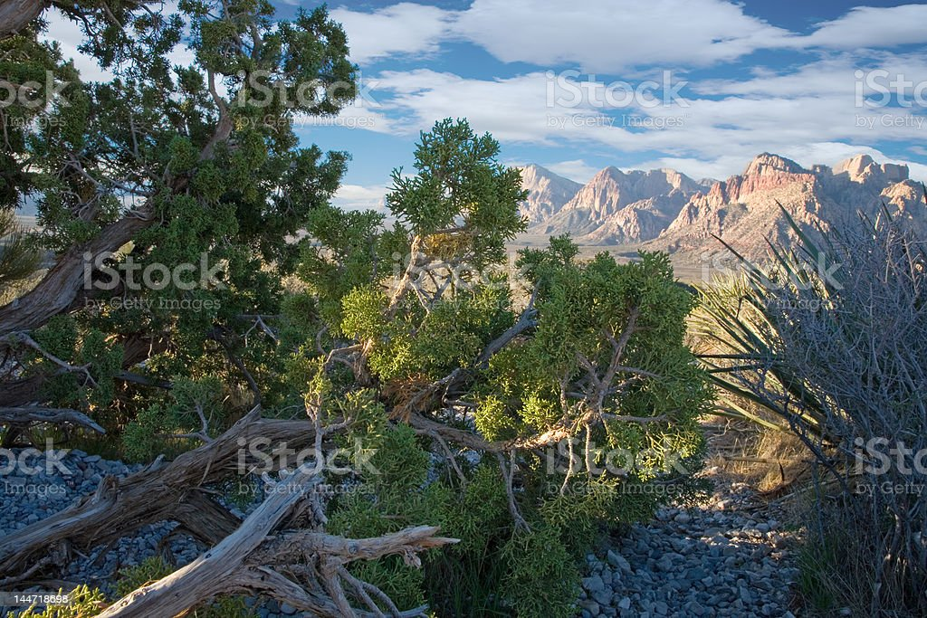 Red Rock Canyon, Nevada royalty-free stock photo