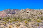 Red Rock Canyon panoramic, Mojave Desert, Nevada, USA
