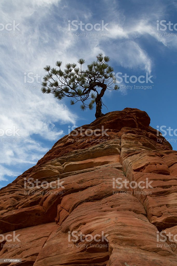 Red Rocks and Tree Vertical stock photo