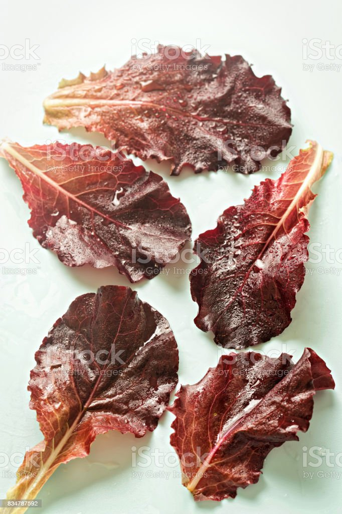 Red romaine leaves on blue background stock photo