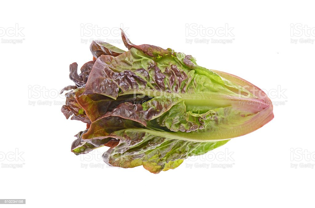 red Romaine lettuce on white Background stock photo