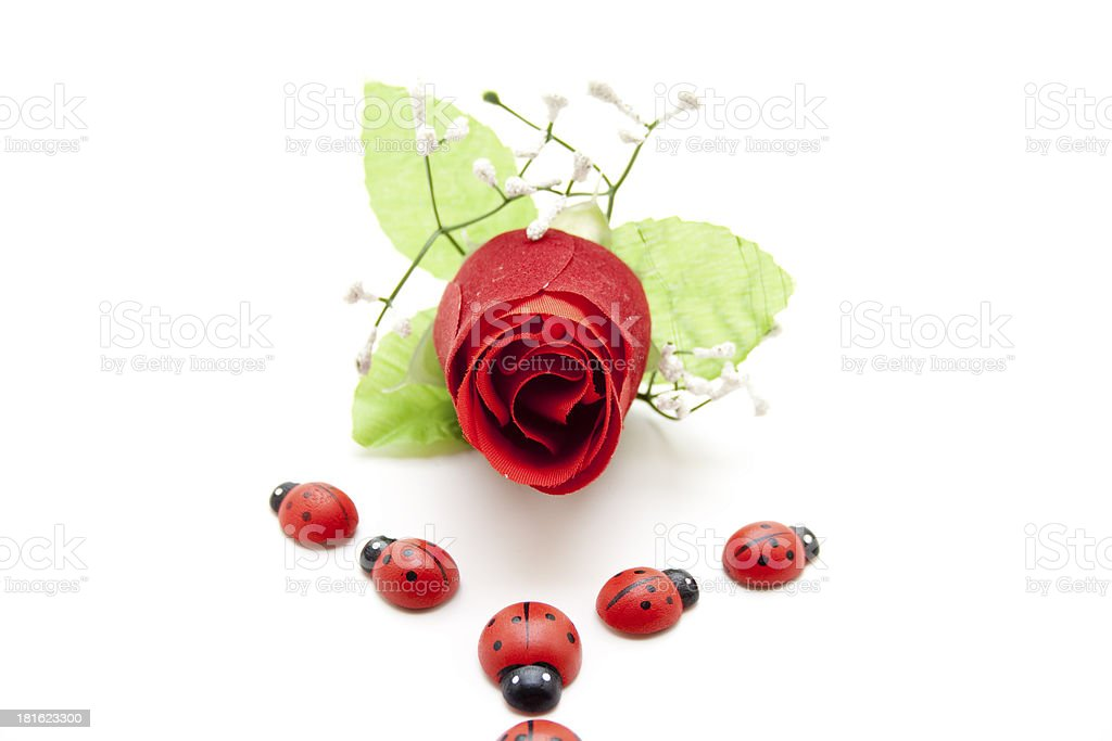 Red rose and ladybug royalty-free stock photo
