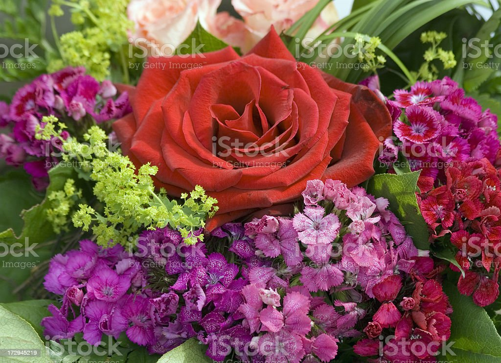 red rose and more royalty-free stock photo