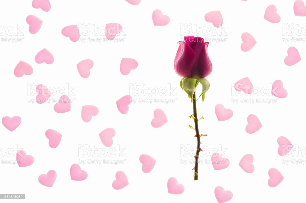 red rose bud in a pink hearts background stock photo