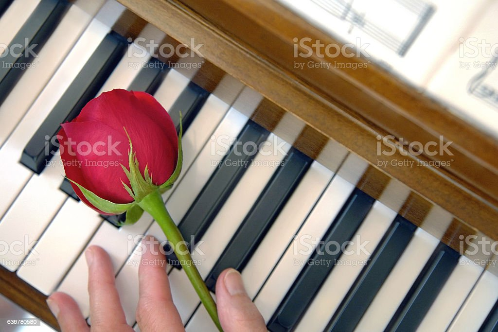 Red Rose, Female Hand and Piano keys stock photo