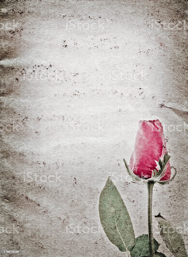 red rose flower old grunge paper texture royalty-free stock photo