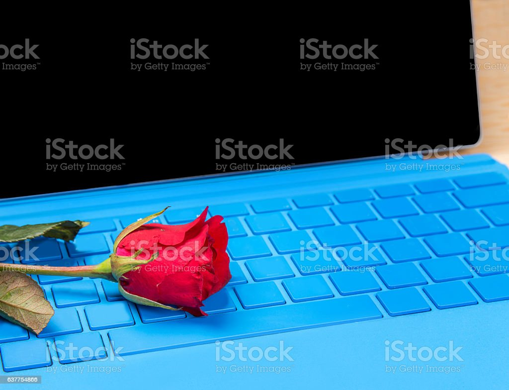 red rose flower on blue typer laptop stock photo