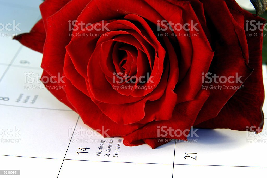 Red rose for St. Valentine's Day stock photo