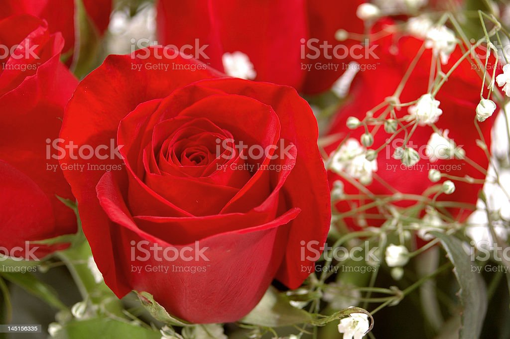 Red Rose in a Bouquet royalty-free stock photo