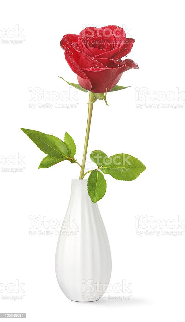Red rose in a vase stock photo