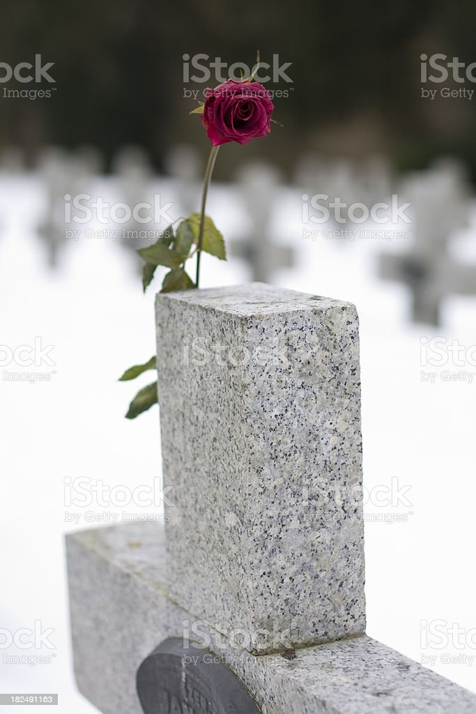 Red rose in cemetery royalty-free stock photo