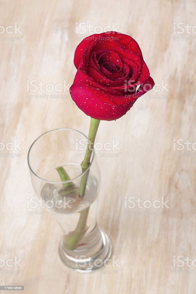 Red rose in the glass royalty-free stock photo