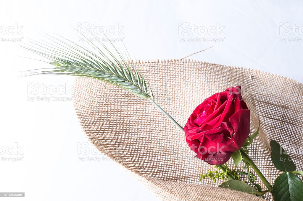 Red rose love gift isolated on a white background stock photo