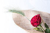 Red rose love gift isolated on a white background