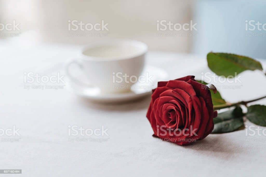 Red rose lying on the table in the restaurant stock photo
