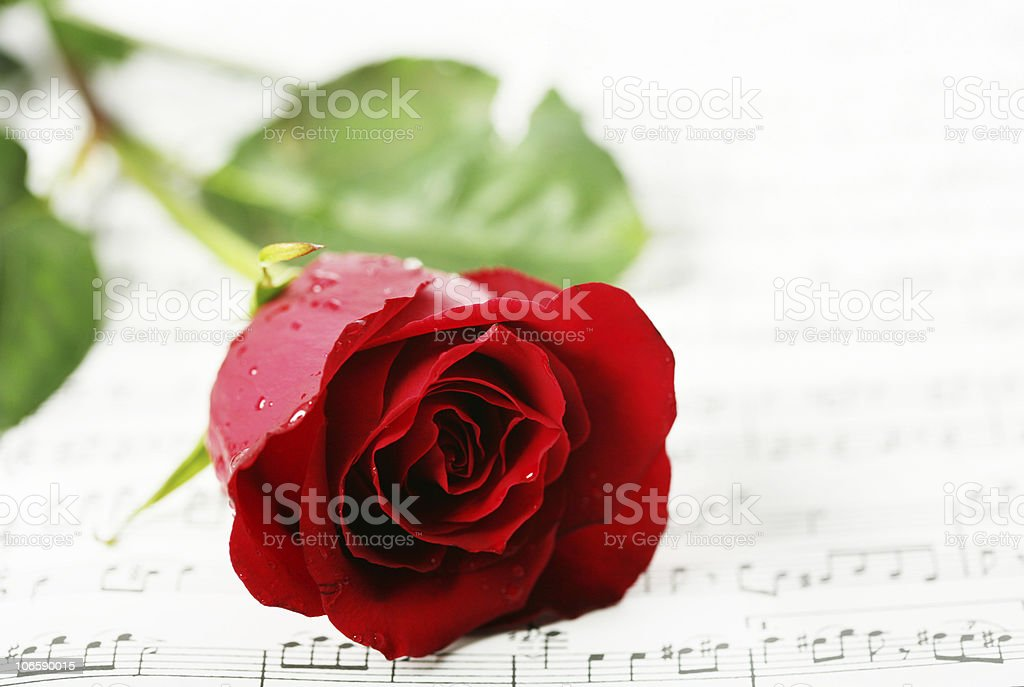 red rose on a paper with notes royalty-free stock photo