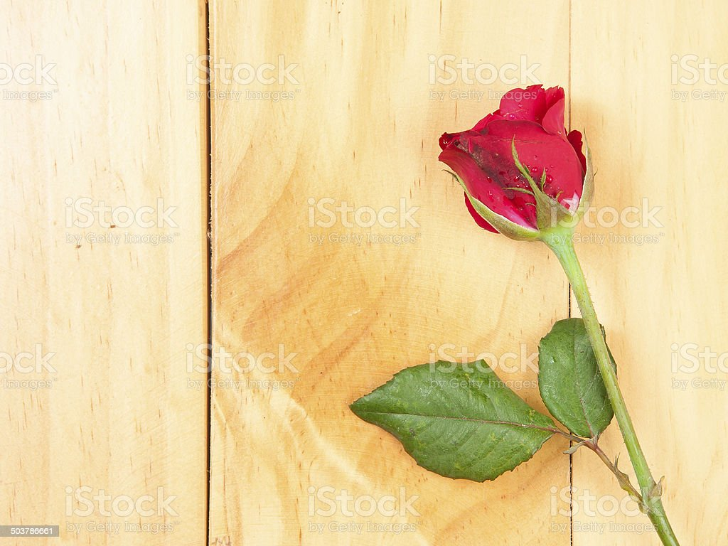 red rose on a wood background stock photo