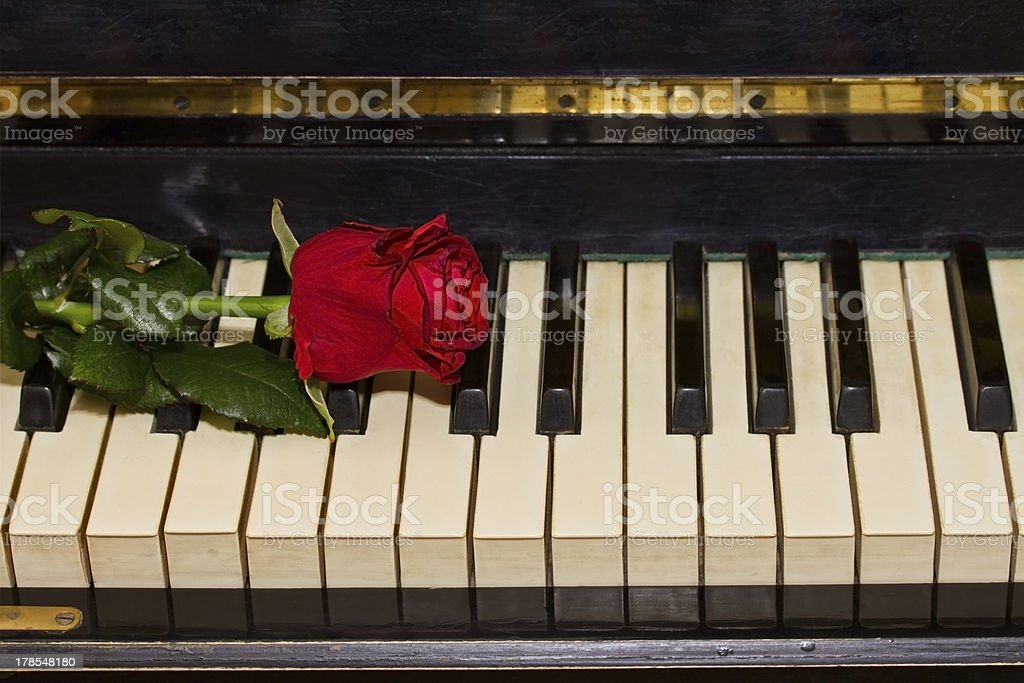 red rose  on piano royalty-free stock photo