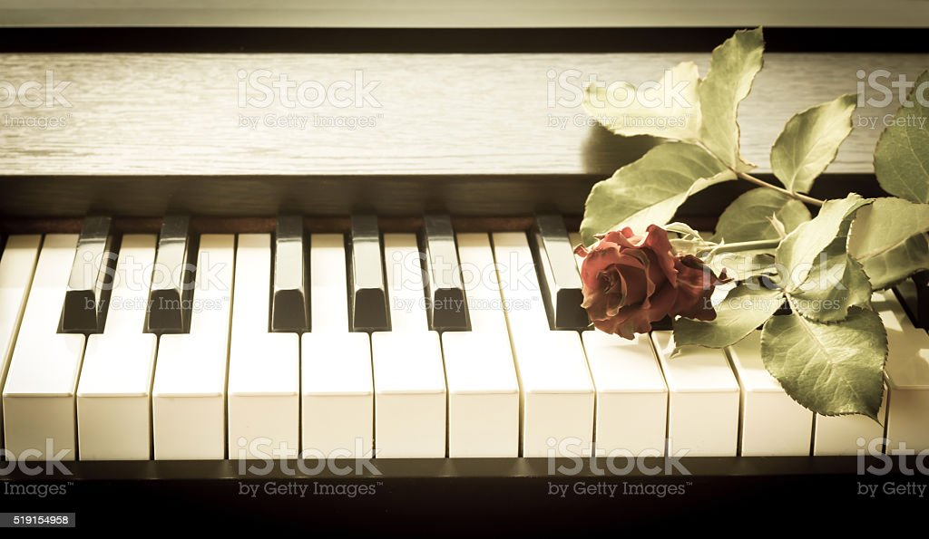 Red rose on piano. stock photo