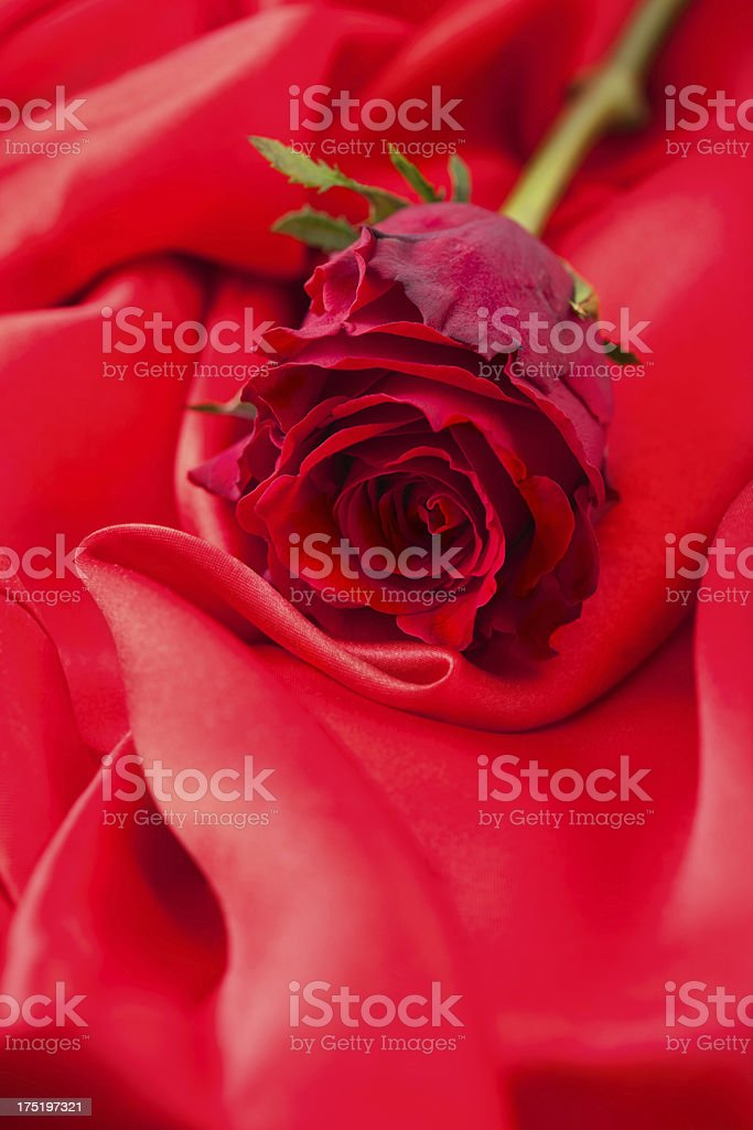 Red rose on satin royalty-free stock photo