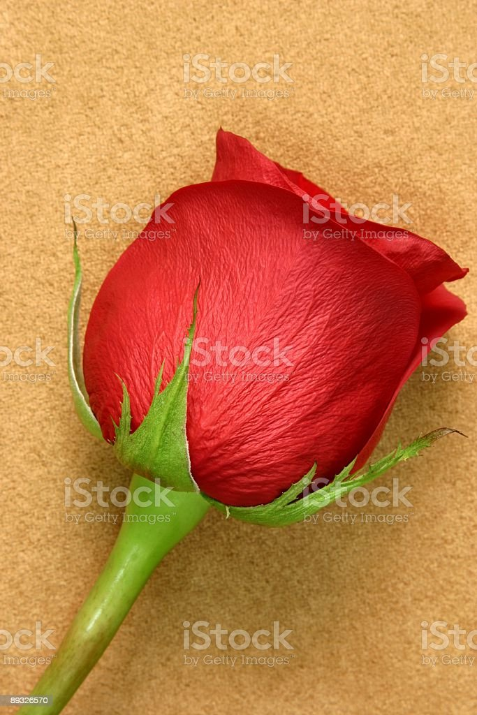 Red Rose on Suede Series royalty-free stock photo