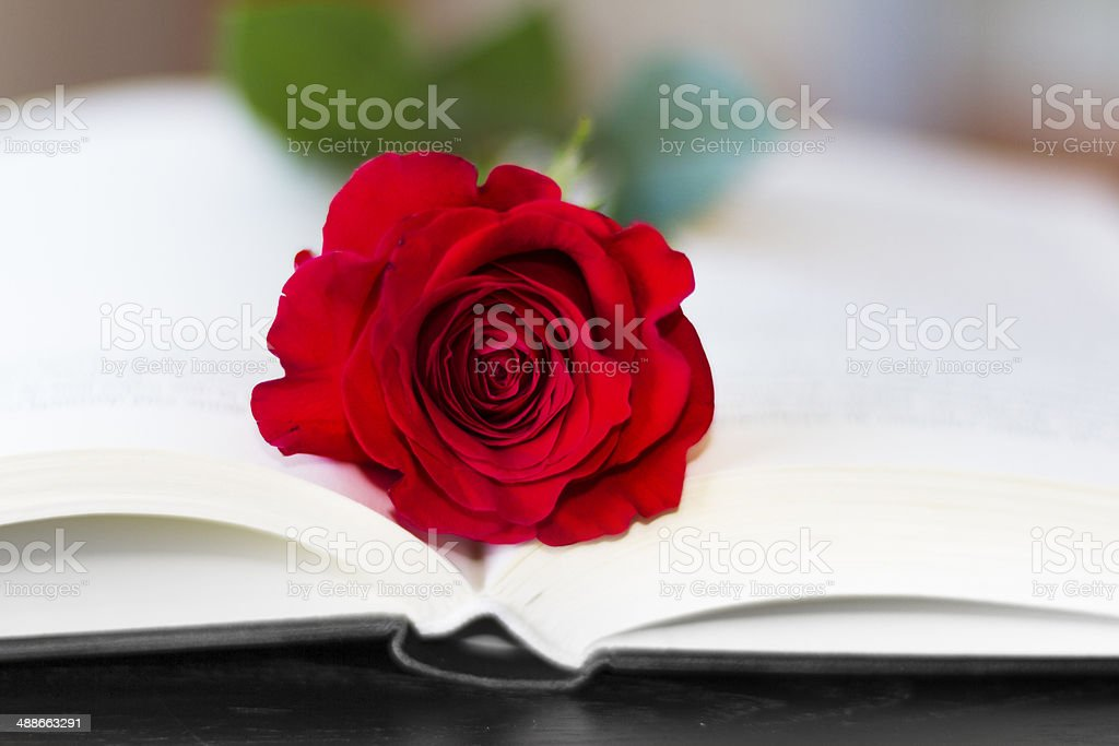 Red rose on the open book royalty-free stock photo