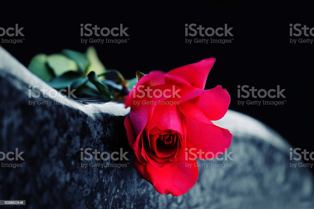 Red rose on the tombstone stock photo