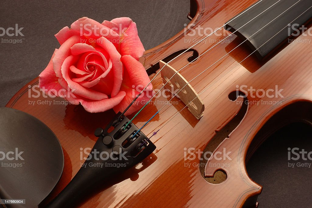 Red Rose on Violin stock photo