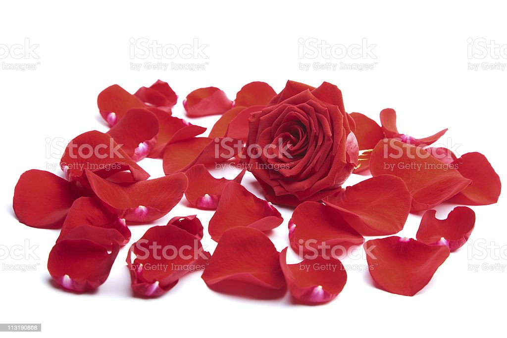 red rose petals isolated stock photo