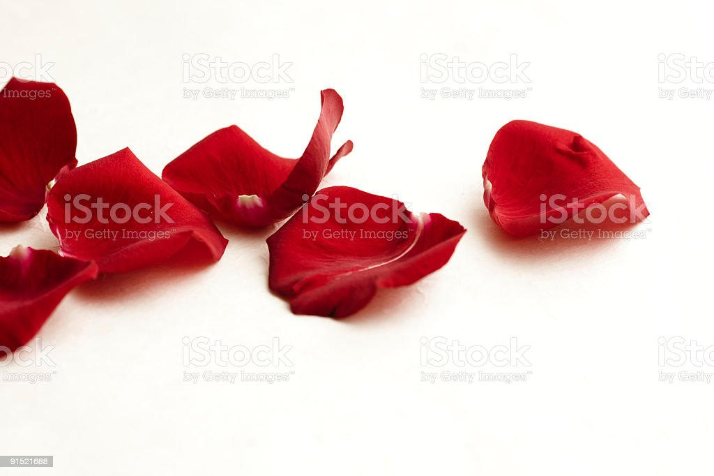 Red rose petals royalty-free stock photo