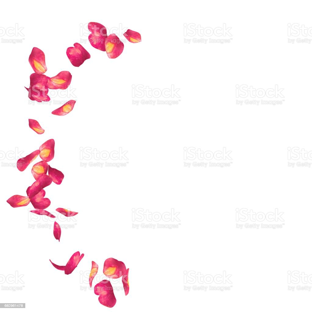 Red rose petals scattered on the floor in a semi-circle stock photo
