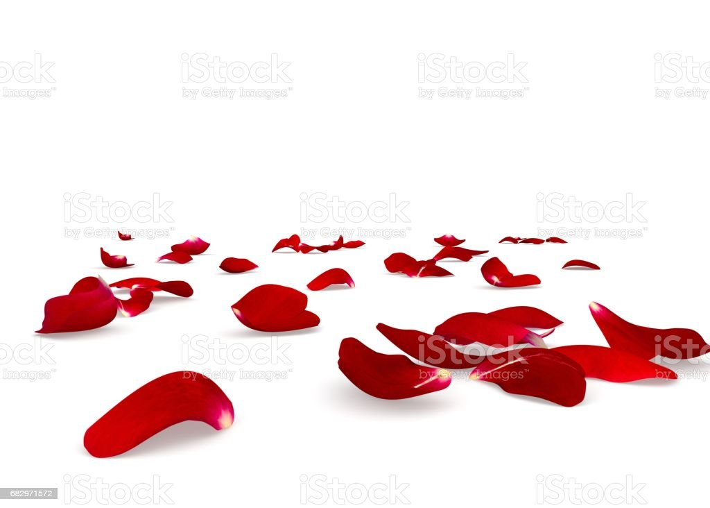 Red rose petals scattered on the floor stock photo