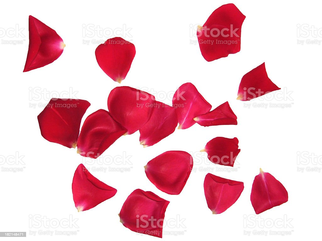Red rose petals sprinkled on white background stock photo