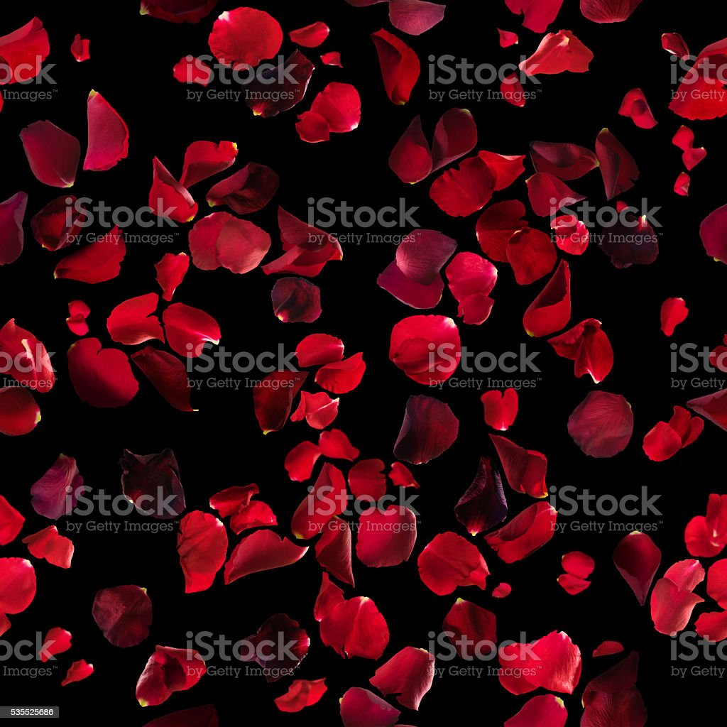 Red Rose Petals Texture on Black stock photo