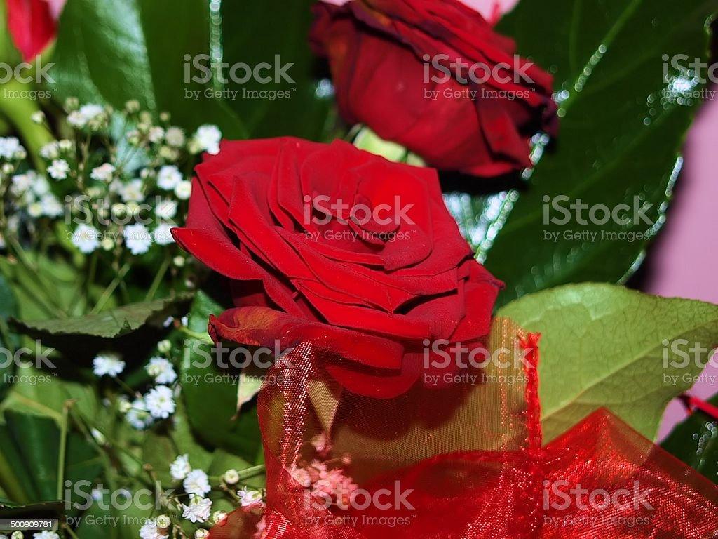 R??a czerwona royalty-free stock photo
