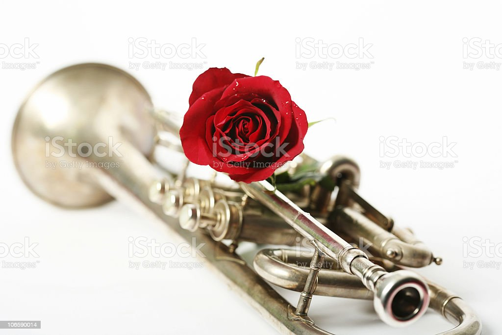 red rose with a trumpet royalty-free stock photo