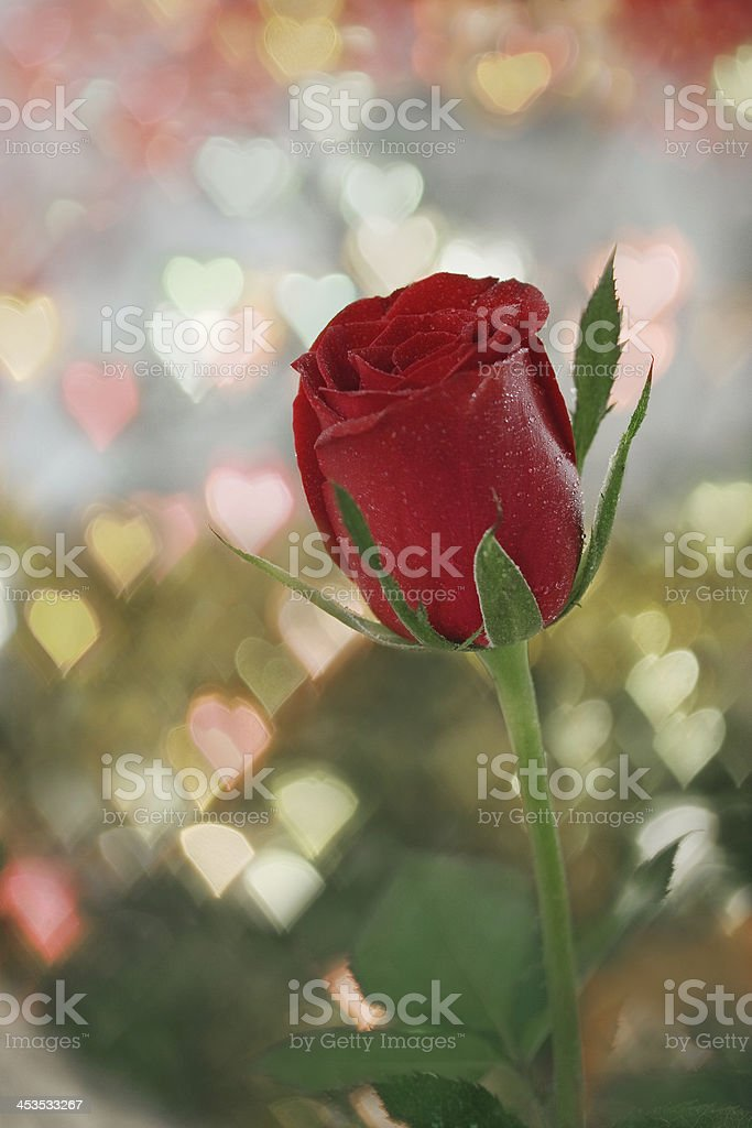Red rose with defocused hearts stock photo