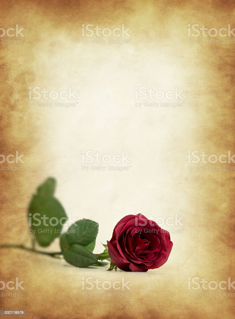 Red rose with old paper stock photo