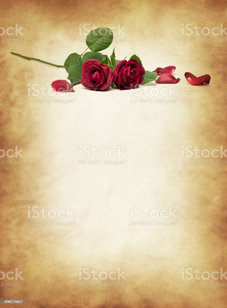 Red rose with old paper XXXL stock photo