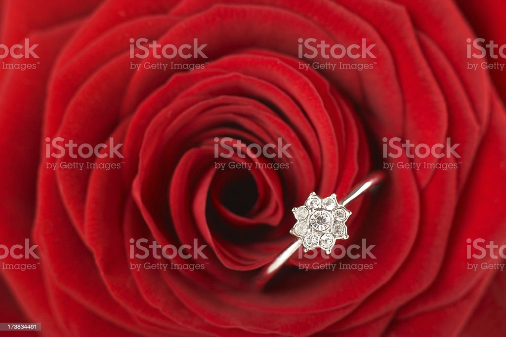 Red rose with ring royalty-free stock photo