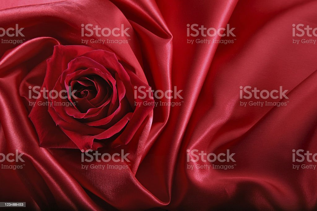 Red Rose Wrapped in  Satin stock photo