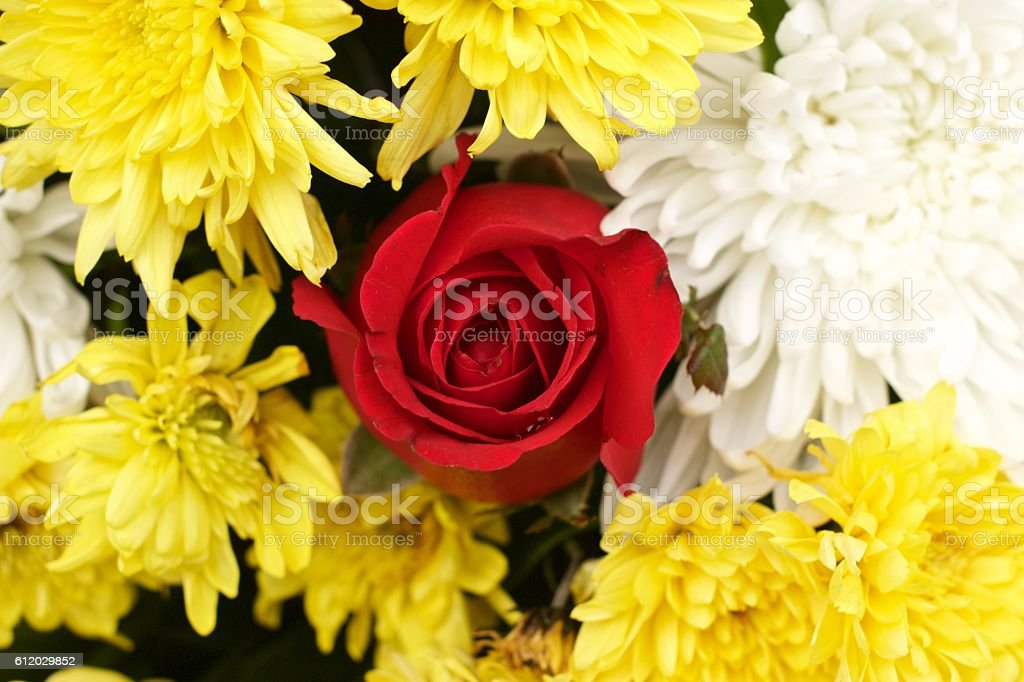Red rose yellow spider chrysanthemum and white chrysanthemum flower mixed stock photo