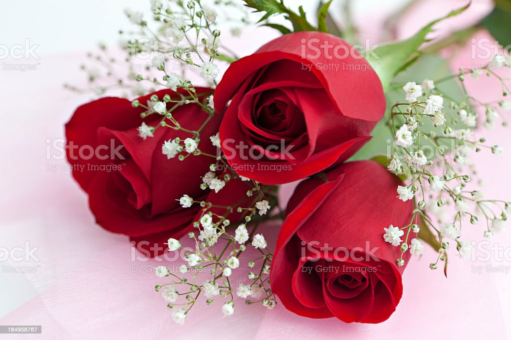 Red roses and baby's breath stock photo