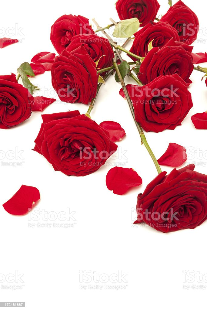 Red Roses and petals lying down royalty-free stock photo