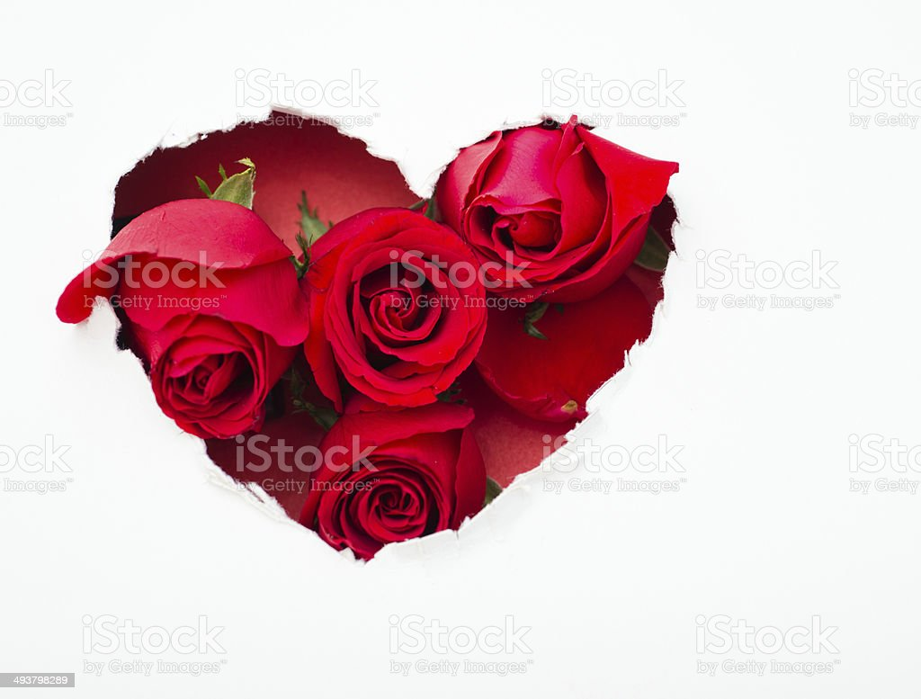 red roses and the paper hearts royalty-free stock photo